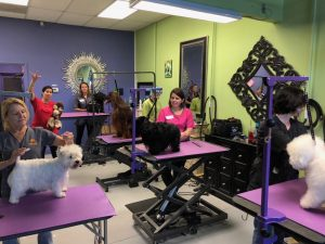 Pam Groomer Certification